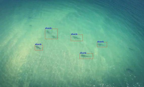 shark-spotter-little-ripper-footage